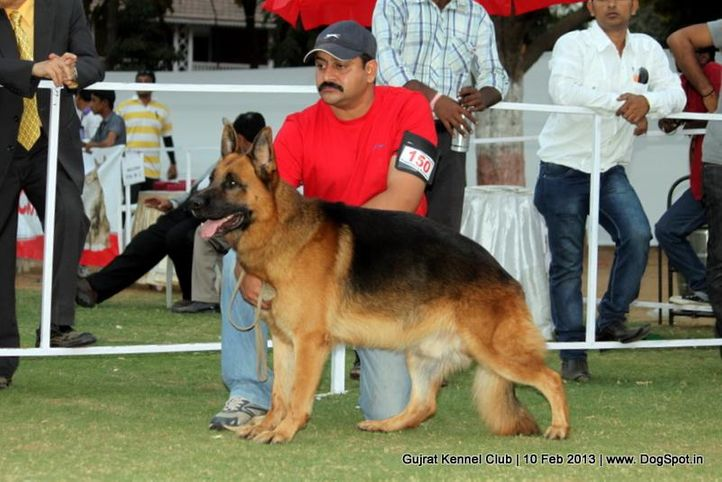 ex-150,german shepherd,sw-83,, Vadodara Dog Show , DogSpot.in
