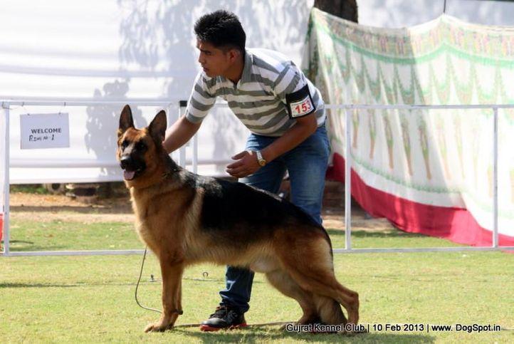 ex-153,german shepherd,sw-83,, Vadodara Dog Show , DogSpot.in