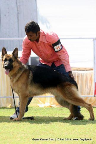 ex-161,german shepherd,sw-83,, Vadodara Dog Show , DogSpot.in