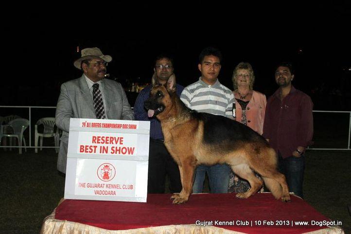 german shepherd,line up,sw-83,, Vadodara Dog Show , DogSpot.in