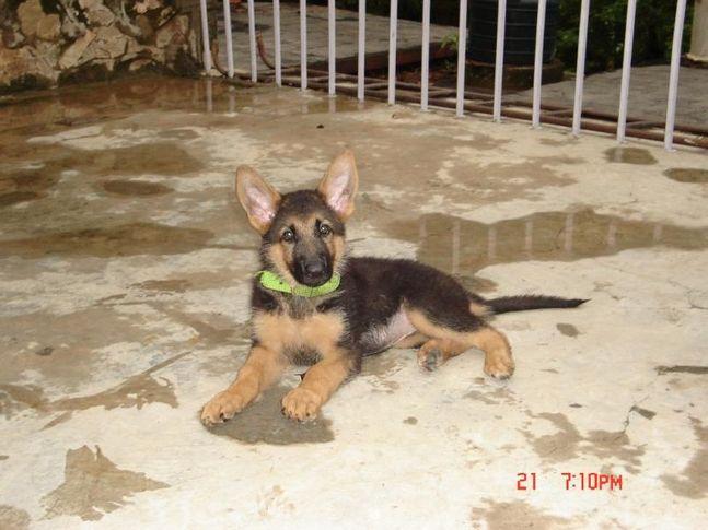 , Xena-The warrior princess, DogSpot.in