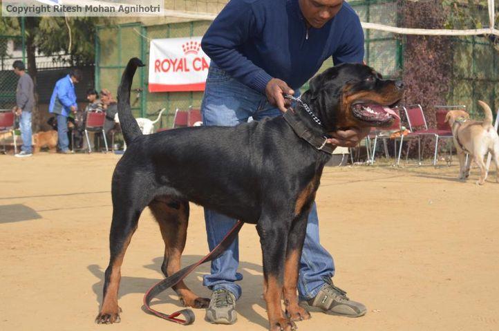 zorro, Zorro, DogSpot.in