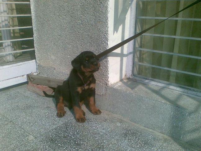 , Zorro, DogSpot.in
