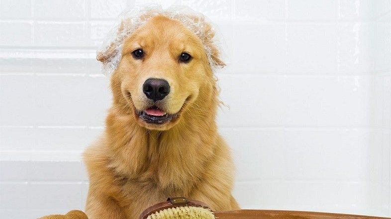 How-To-Give-Your-Dog-a-Bathinggggg