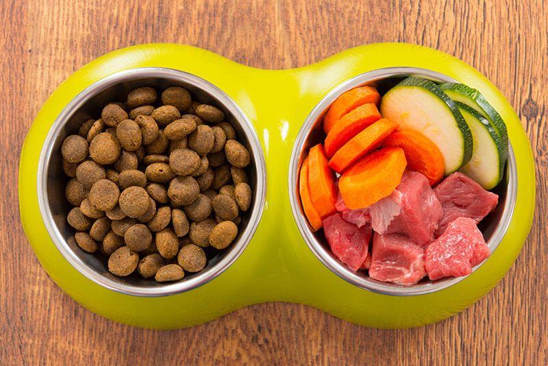 Dog Nutrition Series Part 1 - Protein 101