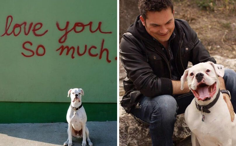 A Dog's Open Letter To His Owner On The Last Day Of The Puppy's Life   Dogspot.in